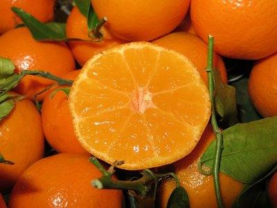 Mandarinas para zumo Ortanique
