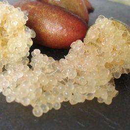 Caja Mixta 4 kg limas + 100 gr caviar cítrico