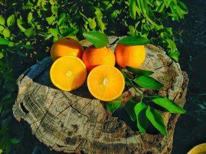Caja de naranjas de mesa 10Kg